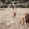 2020.15.05 - Wereld Natuur Fonds daat Vakkanjers uit met nieuwe Challenge